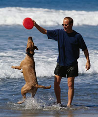color photo of a dog playing with a frisbee